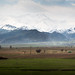 Green Van and the Great Tien Shan