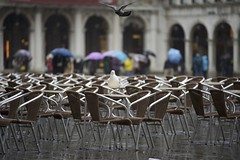 occupied (hoffi99) Tags: hoffi99 venice rain seagull pigeon
