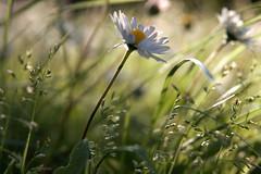 vento (alesolofoto) Tags: vento pratoline garden giardino casa athome wind