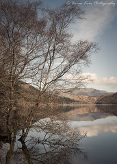 Thirlmere (.Brian Kerr Photography.) Tags: lakedistrict cumbria landscapephotography photography outdoor outdoorphotography nature naturallandscape natural briankerrphotography briankerrphoto clouds blencathra lakes a7rii availablelight trees reflections sony sky tree river
