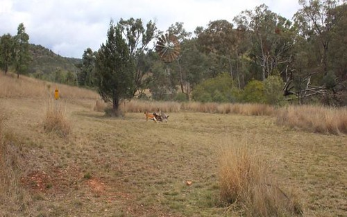 Lot 74 Mole River Road, Tenterfield NSW 2372
