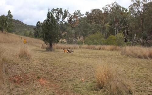 Lot 74 Mole River Road, Tenterfield NSW 2372