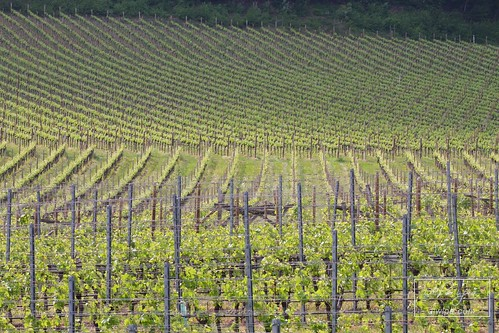 "Strada del Vino - Suedtiroler Weinstrasse • <a style=""font-size:0.8em;"" href=""http://www.flickr.com/photos/104879414@N07/33573129274/"" target=""_blank"">View on Flickr</a>"