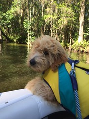 Kizzie and Chewy's Arlo loves boating!