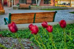 The Inviting Bench (kendoman26) Tags: bench benchmonday happybenchmonday hdr nikhdrefexpro2 nikon nikond7100 nikon35mm nikon35mmafsdx dof shallowdof morrisillinois canalportpark