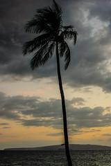 DSC04060.jpg (jaғar ѕнaмeeм) Tags: kihei hawaii unitedstates us wailea maui marriott luau