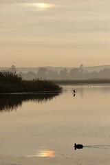 Sun Dog (blachswan) Tags: ballarat victoria australia lakewendouree lake dawn sundog parhelion clouds reflection