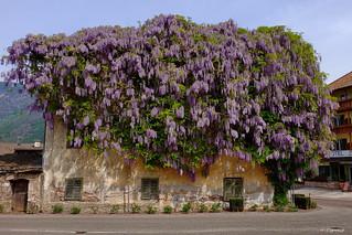 Florale Hausbesetzer