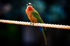 Colors of Nature (Nikonphotography D750) Tags: explore inexplore tierparkhagenbeck tierpark zoo hagenbeck nikon nikond750 nikonphotography hamburg igershamburg farben colors hagenbeckstierpark atthezoo hamburgmeineperle vögel birds exoticbirds colorsofnature