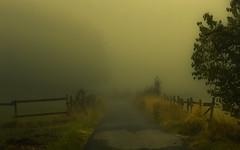 Aimlessly through the Day (Netsrak) Tags: baum bäume europa europe forst landschaft natur nebel wald fog forest landscape mist nature tree trees woods rheinbach nordrheinwestfalen deutschland de path way weg waldweg eifel
