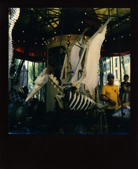 Pterodactyl (DocteurKi) Tags: instantphotography polaroid impossibleproject sx70 expired colorforsx70 blackframe carousel dinosaur bones