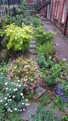 20170517_084053 (Carol B London) Tags: sgc flowers floral stepney stepneygreencourt stepneygreen e1 londone1 flowering bushes residentgarden gardens ids