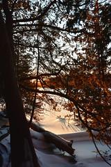 Une émotion passagère (David Anghelone) Tags: nikond810 tamron 1530 28 sunset coucher de soleil rayon forêt canada parc naturel bruce peninsula ontario neige snow winter hiver orange travel road trip froid cold