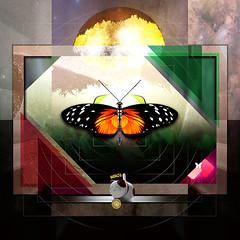 Freedom New (mfuata) Tags: freedom özgürlük aydınlık light kelebek butterfly huzur peace barış sulh