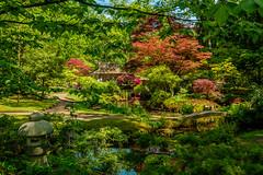 Japanese Garden (FotoCorn) Tags: clingendael denhaag japanesegarden japansetuin thehague netherlands tuin colorful bej
