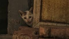 Kitten Next Door (richard_fernando) Tags: concretejungle cute peek look life newborn street pose stare cat kitten
