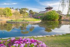 Suwon Castle. (Kim Jin Ho) Tags: suwon castle korea tourist travel destination famous place flower spring landscape canon 100d sl1 1018