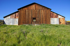 Wear Sunscreen (nedlugr) Tags: california ca carrizoplain carrizoplainnationalmonument usa sanluisobispocounty green grass barn fence window weathered weatheredwood corrugated tinroof ruraldecay ruralwest rural wearsunscreen rust