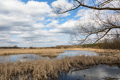 Spring landscape (Oleg.A) Tags: spring landscape penzaregion russia river nature water park rural outdoor lake midday villiage clouds landscapes noon outdoors penzenskayaoblast ru