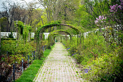 Brooklyn Botanical Garden 4-2017 (Fusco Industries) Tags: brooklyn botanical garden 42017 trees tulips bonsai monkey legs lady sexy