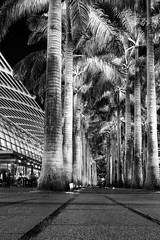 Side by side (leadin2) Tags: x g5 g5x powershot canon 2016 singapore city tourism marina bay sands black white mall building mbs