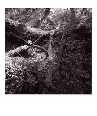 DIAP WOOD 007 (Dominiq db) Tags: diapo séries wood trees arbres forêt nature