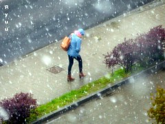 snowing in late April... (Ola 竜) Tags: snow spring lateapril snowyday snowing street candid lawn redbush pavement sidewalk road woman bluejacket hood brownbag walking walk curledup crouched human cold freezing highpov
