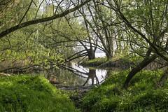 Swamp - Biesbosch, Dordrecht (Nederland in foto's) Tags: nederlandinfotos nederland netherlands nikon biesbosch dordrecht paulvandevelde pdvandevelde padagudaloma outdoorphotography outdoor natuurfotografie nature naturephotographer pants