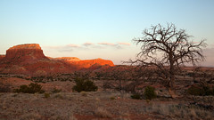Let It Be (OneLifeOnEarth) Tags: onelifeonearth newmexico sunset tree ghostranch