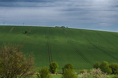 Crop circles (Jumpin'Jack) Tags: crop circles circular tractor tire tyre tracks green wheat field trees bush ona slope rolling hills south moravia czech republic white clouds nature electric poles towers power lines serene landscape farm land outdoors