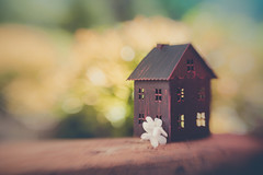 The garden is my happy place (Ro Cafe) Tags: lensbaby sweet50 garden stilllife miniature flowers blur bokeh colorful outdoor house soft nikond600