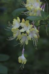 2017_04_22_Atlanta Botanical Gardens_023 (tbottom) Tags: gardens botanicalgardens flowers orchids atlantabotanicalgardens terrybottom suebottom