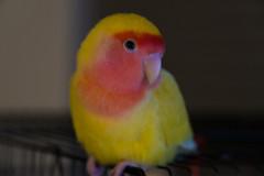 Jerk Bird