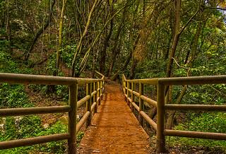 El puente del bosque. (The bridge of the forest).