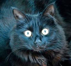 Never sneak up on a sleeping cat.... (rustyruth1959) Tags: nikon nikond3200 sigma105mm cat feline eyes fur animal yorkshire black blackcat jingles nose ears