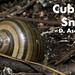 Cuban Snail, Polymita sp.
