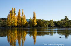 Autumn in Canberra (Anna Calvert Photography) Tags: australia canberra lakeburleygriffin travelphotography autumn autumncolours landscape landscapephotography nature trees water reflections poplartrees