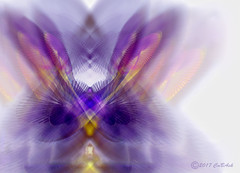 Grail guard (CaBAsk! on and off. Thank U for the visit ♥) Tags: abstract art graphics bomomo phtoshop digital manipulation image expression feathers salvation imagination fantasy light white purple spirit bird technical rays sircles norway easter entrance guide layers grail guard flower joy