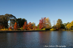 Beautiful autumn colours, Canberra (Anna Calvert Photography) Tags: australia canberra lakeburleygriffin travelphotography autumn autumncolours landscape landscapephotography nature trees water reflection