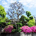 #2129 traditional house and azalea (ツツジ)