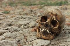 IMG_6221 (anthrax013) Tags: india varanasi corpse dead death bones skull flesh decomposition rot decay necro necrophilia