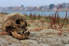 IMG_6229 (anthrax013) Tags: india varanasi corpse dead death bones skull flesh decomposition rot decay necro necrophilia