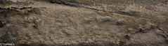 Sandstone (correia.nuno1) Tags: geologia geology kehadru paleozóico praga praha pískovec répúblicacheca arenito sandstone sedimentology