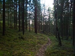 Trostebekk Downhill hillclimb loop -A look back_20170512_195459 (mtbboy1993) Tags: sti singletrack mtb mountainbiking sykling trail forest