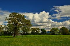 Frühling im Chiemgau (franz_rank) Tags: landscape landschaft nature natur bayern bayerischealpen germany deutschland chiemgau chiemsee