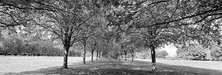 Marbury Park
