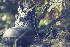 Into the Woods [#intothewoods] (graser.robert) Tags: adobe closeup d7100 germany intothewoods lightroom macromondays member'schoiceintothewoods nikon nikond7100 robertgraser wald blue bodennah closeupcloseup flower flowers forrest green lighttime notamacro shoe shoes woods reinstädt thüringen deutschland de