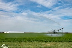 Irrigating field in Grant County (Washington State Department of Agriculture) Tags: circle field irrigation spring sprinkler water