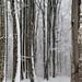 Florestas nevadas na Bulgária