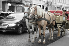 2013. Lviv. Ukraine (bobobahmat) Tags: lviv life lvov ukraine horse cart street old town tourism city color animal 2013 car transport bnw bw black white blackandwhite blackwhite blacknwhite